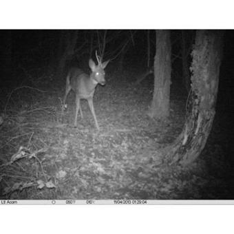 appareil photo nocturne chasse