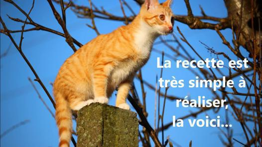 répulsif chat naturel